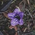 Floral Mechinagar.jpg