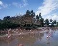 Florida flamingos LCCN2011630382.tif