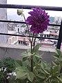 Flower20180527 184541.jpg