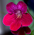 Flower (5767127451).jpg