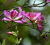Flower I IMG 3348