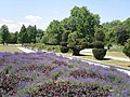 Flower gardens in Battersea Park - geograph.org.uk - 1440496.jpg