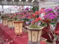Flowermarket5.jpg