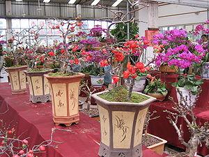 Lingnan penjing - Penjing being sold in a flowermarket in Futsan, Gwongdung.