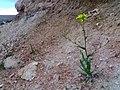 Flowers growing from Castilla's land.jpg
