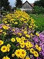 Flowers in Garden - Tykocin - Poland (36155938631).jpg