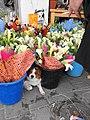 Flowershop dog - panoramio.jpg