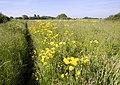 Footpath and Meadow - geograph.org.uk - 835830.jpg