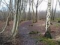 Footpath through Blakes Wood - geograph.org.uk - 314465.jpg