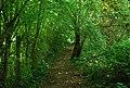 Footpath through Porter's wood - geograph.org.uk - 1361065.jpg