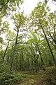 Forêt Départementale de Méridon à Chevreuse le 29 septembre 2017 - 13.jpg