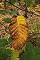 Forêt Départementale de Méridon à Chevreuse le 29 septembre 2017 - 19.jpg