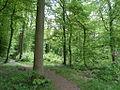 Forêt de Mormal.JPG