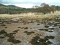 Foreshore of West Loch Tarbert - geograph.org.uk - 145459.jpg