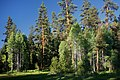 Forest & Meadow at Sunset-Malheur (23931670185).jpg
