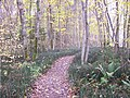 Forest of Bulduri - panoramio.jpg