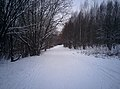 Forest road in winter - panoramio.jpg