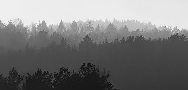 Forested hills in Lysekil in fog