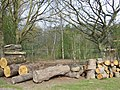 Forestry and Lake, High Park, Staffordshire - geograph.org.uk - 393530.jpg