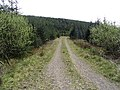 Forestry road - geograph.org.uk - 419532.jpg