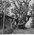 Fotothek df ps 0001135 Bäume.jpg
