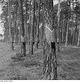 Fotothek df ps 0002266 Bäume.jpg