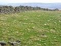 Freshly limed field adjoining Edmondbyers Common - geograph.org.uk - 157139.jpg