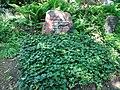 Friedhof heerstraße 2018-05-12 (40).jpg