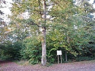 320px-Friedwald_bei_Hohenentringen_-_panoramio.jpg