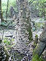 Fungal growth on a tree stump near the southern edge of Bysing Wood - geograph.org.uk - 1261728.jpg