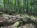Głazowisko koło Leśniczówki Rostek - panoramio (1).jpg