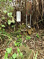 Gaotou - on the top of Jin Mt - survey mark - DSCF3303.JPG