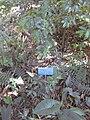 Gardenology.org-IMG 0704 rbgs10dec.jpg