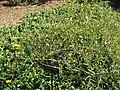 Gardenology.org-IMG 0757 hunt07mar.jpg
