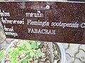 Gardenology.org-IMG 7770 qsbg11mar.jpg