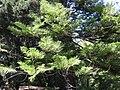 Gardenology.org-IMG 9361 rbgm10dec.jpg