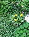 Gardens in Baghdad 17.jpg