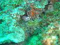 Geometric moray at Island Rock DSC04770.JPG