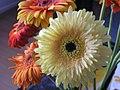 Gerbera flowers.jpg