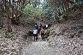 Ghorepaani Ghandruk Trail 1.jpg