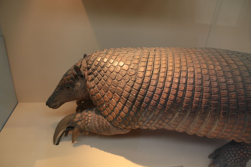 File Giant armadillo  Priodontes maximus   Natural History Museum    Giant Armadillo