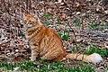 Gillie in the spring (5611271365).jpg