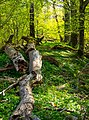 Glade with fallen tree.jpg