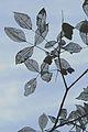 Glass Leaves.JPG