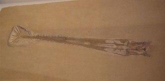 1833 in paleontology - Image: Gnathosaurus JW Photo