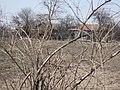 Goji-lycium chinense - panoramio.jpg