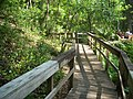 Gold Head Branch SP ravine path03.jpg