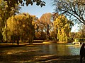 Golden Leaves - panoramio.jpg
