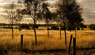 Golden Plains Shire - Typical scenery of the Golden Plains Shire.