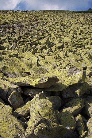 Gorgany - Debris field - gorgan